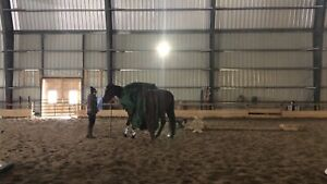 Horse Training Available!