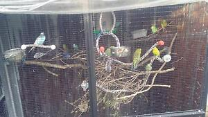 Please Read:  Budgie and Small Pet Bird Welfare Melville Melville Area Preview