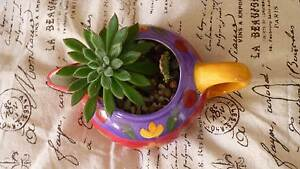 LOVELY HANDPAINTED SMALL JUG TERRARIUM WITH SUCCULENT/CACTUS Fletcher Newcastle Area Preview