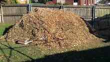 Free wood chips (SOLD) Newnham Launceston Area Preview