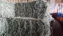 Lucerne Square Bales of Hay For Sale Maitland Maitland Area Preview