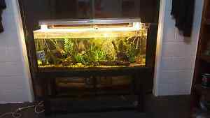 4ft fish tank and stand with fish Mount Tarampa Somerset Area Preview