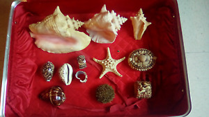 collections de coquillages