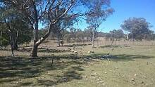 Agistment Wanted - Stanthorpe Stanthorpe Southern Downs Preview