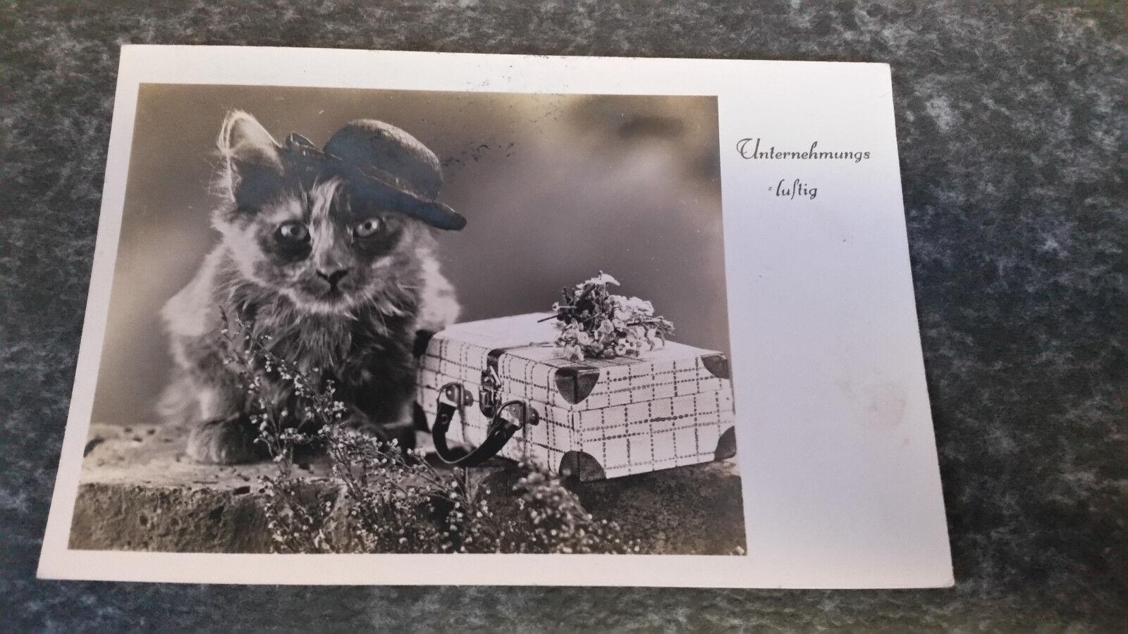 AK  Katze  Hut Koffer Blumen mauerwerk Unternehmungs Lutig Postkarte 11577