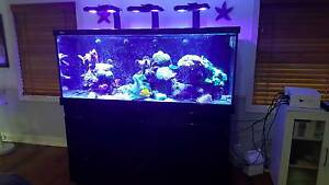 Red Sea Max 650 Marine Aquarium including stock ( fish and coral) Boambee Coffs Harbour City Preview