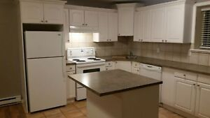Large 1 bedroom basement suite available now