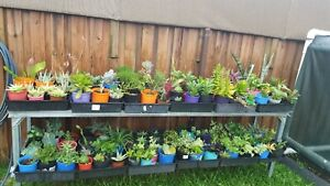 Lots of plants succlents  cacti  and a few treesgreat price $5each Robina Gold Coast South Preview