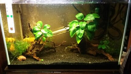 Planted tank setup anubias shrimp Canley Vale Fairfield Area Preview