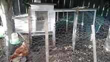 3 red chickens and chicken coop call 0 Cabarita Canada Bay Area Preview