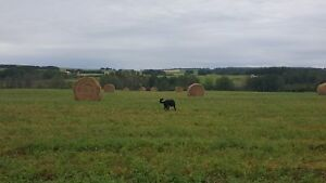 Alfalfa Timothy Brome Mix Hay Feed Bales for Sale