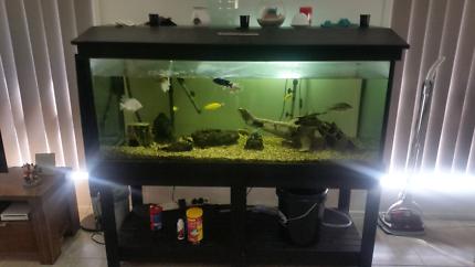 Fish Aquarium with all accessories including fish