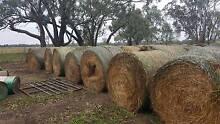 5 x 4 Round Bales - Slow Feeding Hay / Net - ECHUCA AREA Echuca Campaspe Area Preview