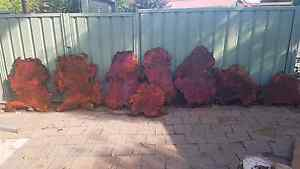 8 seasoned red gum burl slabs Inverell Inverell Area Preview