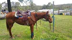16+ inch Western saddle Karuah Port Stephens Area Preview