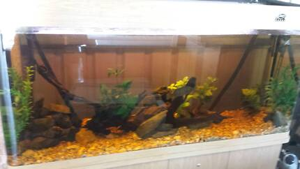 fs: 5ft curved front tank and mangrove jack Brisbane City Brisbane North West Preview