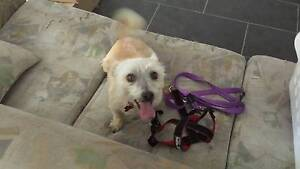 Urgent rehome our dog Sammie Gordon Tuggeranong Preview