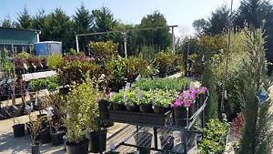 HUGE PLANT SALE EVERY FRI, SAT & SUN 9AM TO 5PM PRICES FROM $5.90 Skye Frankston Area Preview