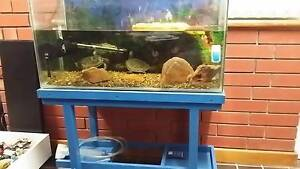 2 short neck turtles and fish tank aquarium new pump new heater Fairview Park Tea Tree Gully Area Preview