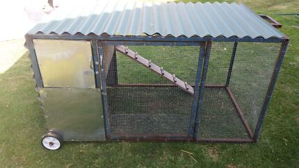 Guinea Pigs Palace Meadowbrook Logan Area Preview