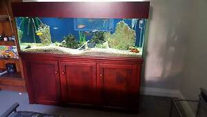 6ft Fish Tank Aquarium Complete Two Rocks Wanneroo Area Preview