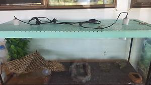 Bearded dragon & lake Macquarie short neck turtle Tarzali Tablelands Preview