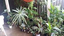 Assorted Potted Plants For Sale starting from $3 Spearwood Cockburn Area Preview