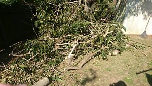 Fire Wood - Log Pieces, Tree Scraps Kallangur Pine Rivers Area Preview