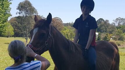 16yro beginner pony  Belli Park Noosa Area Preview