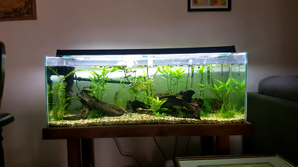 4 foot fish tank with stand