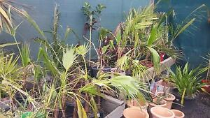 Discount plants starting at $1 each Greenvale Hume Area Preview