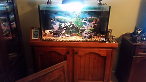 Fish Tank 3ft Bidwill Blacktown Area Preview