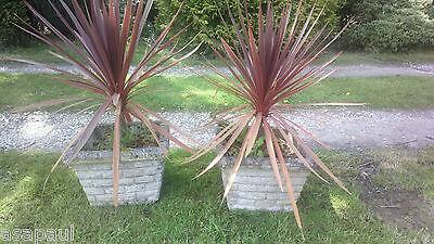 garden find pair of planters