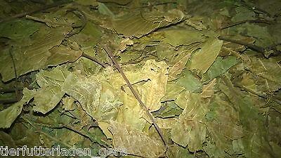 500 gramm getrocknete Walnussblätter mit Stiele Walnuss Blätter getrocknet
