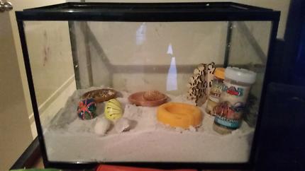Hermit crab kit - tank, food, heater & accessories