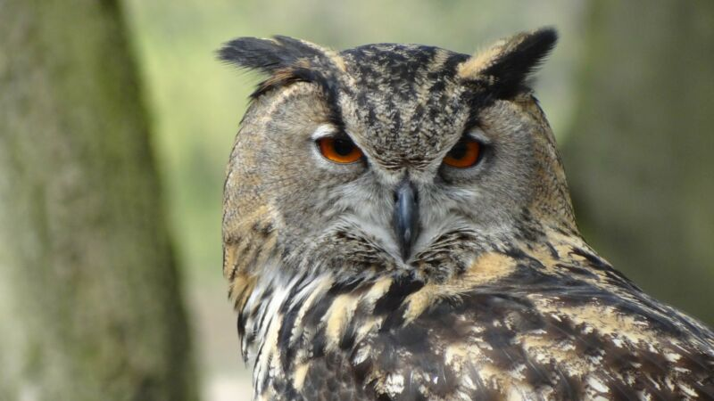 Owls are a symbol of wisdom and learning in Western society. It's easy to see why!