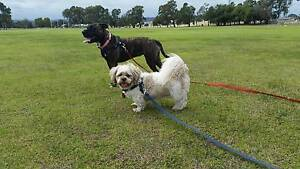 Ti-Anah's Happy Paws Dog Walking Huntingdale Gosnells Area Preview