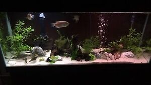 ISO 75g+ tank and stand