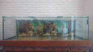 6ft 670 Litre Fishtank $500 ONO Booragoon Melville Area Preview