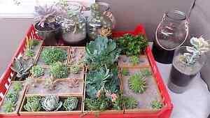 Succulents @ the armidale farmers market Armidale Armidale City Preview