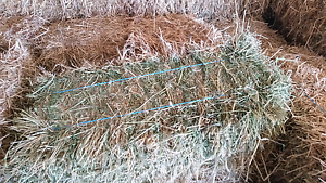 Meadow hay Wasleys Gawler Area Preview