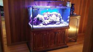 Marine aquarium reef tank Lonsdale Morphett Vale Area Preview