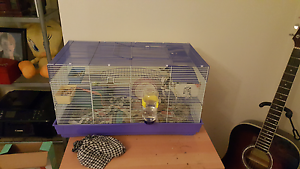 4 mice and cage Duncraig Joondalup Area Preview