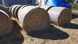 Hay for sale Toolamba Shepparton City Preview