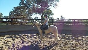 3 beautiful horses for sale to loving homes only Orchard Hills Penrith Area Preview