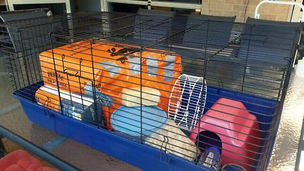Rat cage + accessories Attadale Melville Area Preview