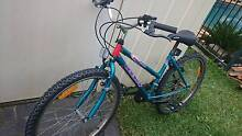Adult Bicycle Thornton Maitland Area Preview