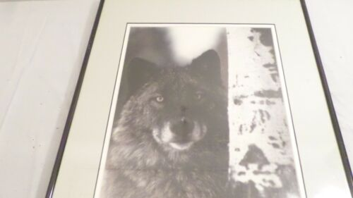 """16.25 x 20.25"""" Framed Wolf Print Wall Hanging, Wolf by Birch Tree"""