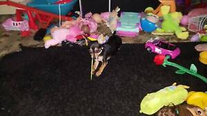 Puppy 6months old