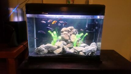 Fish Tank full set up  Algester Brisbane South West Preview